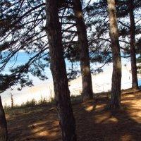 Покой, уют среди исторических деревьев :: Варвара Маевская