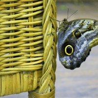 В парке бабочек. :: Лариса Красноперова