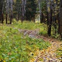 Лесные тропинки... :: Валерий Молоток