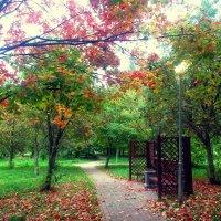 яркая осень :: Мари B