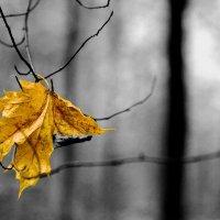 Осенние зарисовки :: vlad alferow