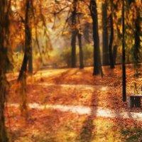 Идет осень через парк :: donat