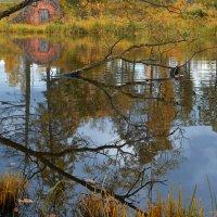 Осень в Приютино :: Владимир