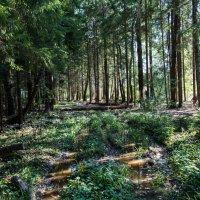 В лес, за опятами... :: Владимир Безбородов