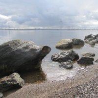 большие черепахи выползли на берег :: tgtyjdrf