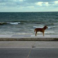 Собака и океан :: Ivan G