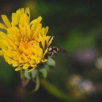 Осенняя муха :: Наталия Галуза
