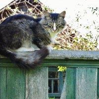 Сидит кошка на заборе ...... :: Святец Вячеслав