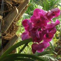 IV Зимний фестиваль орхидей в пальмовой оранжерее :: Анна Воробьева