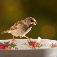 в гостях :: linnud