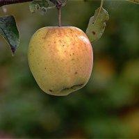 Осенние приятности ... :: Казимир Буйвис