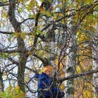 Солнышко на дереве :: Роман Дудкин