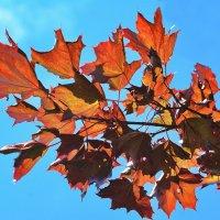 Осень,ты на грусть мою похожа,Осень......... :: Paparazzi