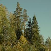 костромские леса :: Михаил Жуковский