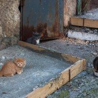 Котятам нужен дом :: Сергей Бойко
