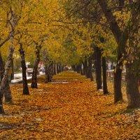 Городская золотая осень :: Михаил Полыгалов