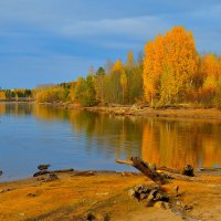 Золотая осень. :: Александр Зуев