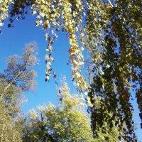 Осень :: Dana