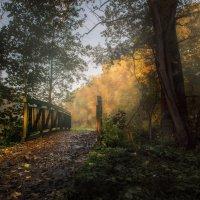 Вступаю в осень , в золотистый мир..,. где музыки своей  звучат лишь слышно звуки.... :: Olga Ger