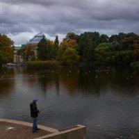 В Таврическом саду осень правит балом :: Елена Маковоз