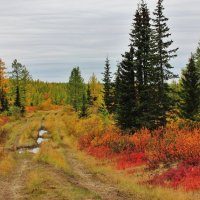 Осень погуляла.... :: Ирина Яромина