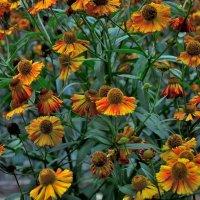 Запоздалые цветы :: Александр Юдин