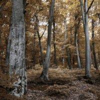 Буковый лес :: Леонид Сергиенко
