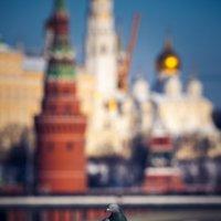 Голубь на Патриаршем мосту :: Алексей Федотов