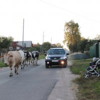 Сельская жизнь :: Колибри М