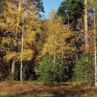 Осени мещёрские смотрины... :: Лесо-Вед (Баранов)