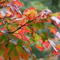 Осень в гатчинском парке :: Валерия Яскович
