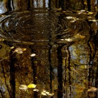 Золотинка упала :: Андрей Тихомиров