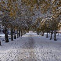 после первого снегопада... :: Alexandr Staroverov