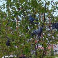 Грачи , ой ! голуби прилетели ! :: Мила Бовкун