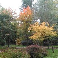 Осень в Александровском парке. (Санкт-Петербург, октябрь 2017г) :: Светлана Калмыкова