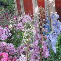 Разноцветье :: Дмитрий Никитин