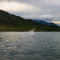 Пейзаж с фонтаном кита :: Shapiro Svetlana