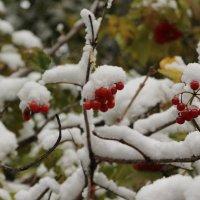 Первый снег в Бийске :: Олег Афанасьевич Сергеев