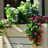 Цветы в интерьере... :: Тамара (st.tamara)