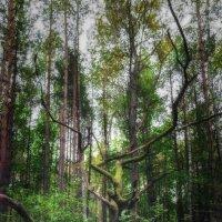 Однажды в лесу :: Игорь Чичиль