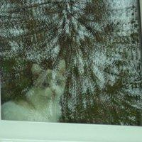 Смотрят барышни в каждом окне :: - Ivolga