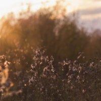 Осенний вечер :: Татьяна Шторм
