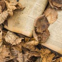 Осенние листья и книжка :: Татьяна Шторм