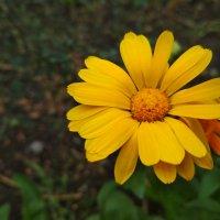 Цветок в саду :: catandrix