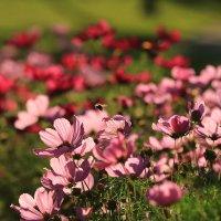 Цветы :: ninell nikitina