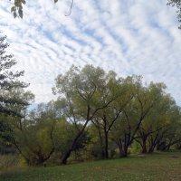 Теплые дни октября. :: Чария Зоя