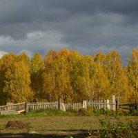 Осень :: Zarina A