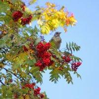 Осень....вернулись зимние птицы! :: Ната Волга