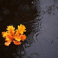 Листочек под дождем... :: Сергей