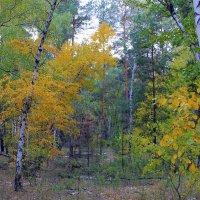 Осень лесу каждый год платит золотом за вход. ( Берестов ) :: Валентина ツ ღ✿ღ